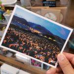 32807232197 72da9a9fe5 z 150x150 - 【台北旅遊。台灣】北投《財福海芋田》穿著可愛的「青蛙裝」採花去