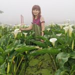 40784254013 06539d8856 z 150x150 - 【台北旅遊。台灣】北投《財福海芋田》穿著可愛的「青蛙裝」採花去