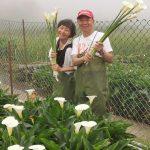 47750647001 2852585f3a z 150x150 - 【台北旅遊。台灣】北投《財福海芋田》穿著可愛的「青蛙裝」採花去