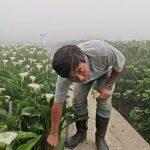47750671151 19d4acac86 z 150x150 - 【台北旅遊。台灣】北投《財福海芋田》穿著可愛的「青蛙裝」採花去